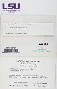 Mycoporum compositum image