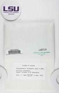 Fuscopannaria laceratula image
