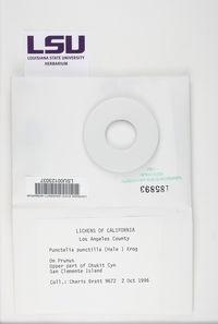 Image of Punctelia punctilla