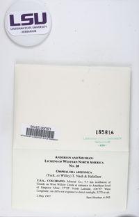 Omphalora arizonica image