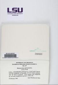 Physconia muscigena image