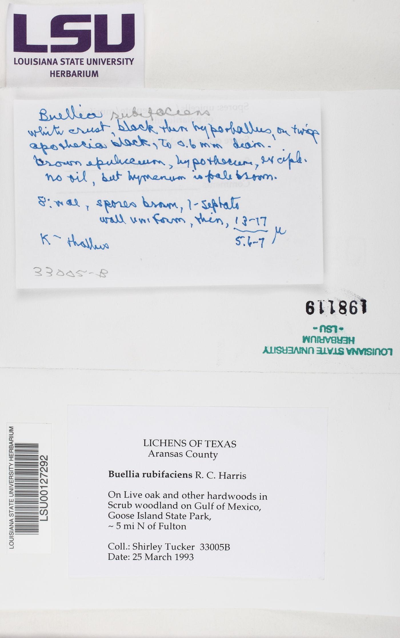 Chrismofulvea rubifaciens image