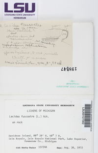 Lecidea fuscoatra image
