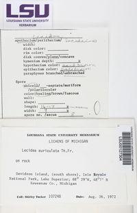 Lecidea auriculata image