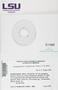 Fuscopannaria leucosticta image