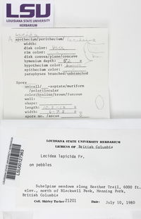 Lecidea lapicida image