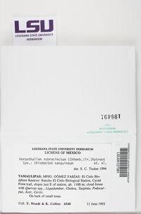 Herpothallon rubrocinctum image