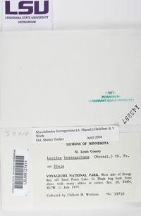 Mycobilimbia berengeriana image