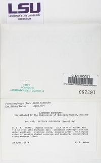 Psorula rufonigra image