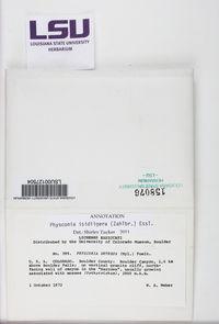 Physconia isidiigera image