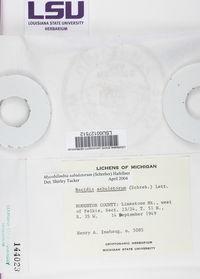 Bilimbia sabuletorum image