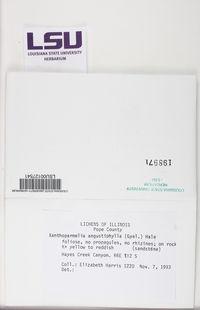 Xanthoparmelia angustiphylla image
