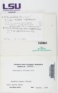 Ochrolechia subpallescens image