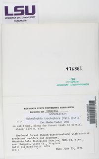 Ochrolechia trochophora image