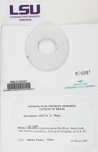 Sarcogyne similis image