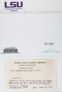 Usnea subscabrosa image