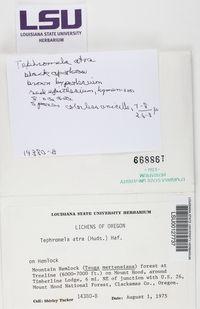 Tephromela atra image