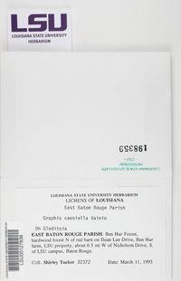 Graphis caesiella image