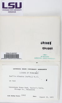 Diplotomma alboatrum image