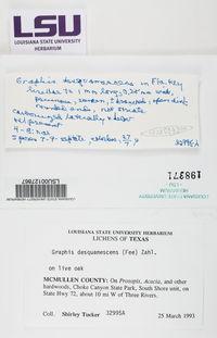 Graphis desquamescens image