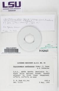 Image of Pycnora xanthococca