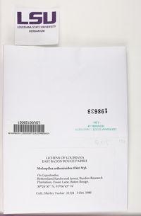 Melaspilea urceolata image
