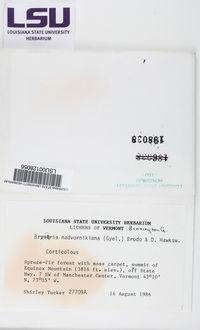 Bryoria nadvornikiana image