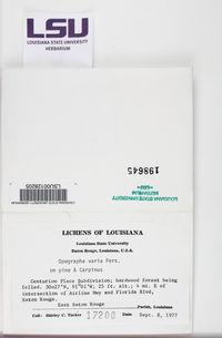 Alyxoria varia image