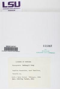 Hypogymnia imshaugii image
