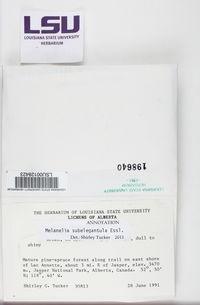 Melanohalea subelegantula image