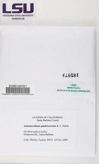 Image of Anisomeridium quadricoccum