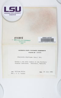 Gowardia nigricans image
