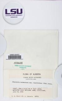 Alectoria vexillifera image