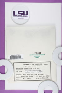 Arctoparmelia centrifuga image