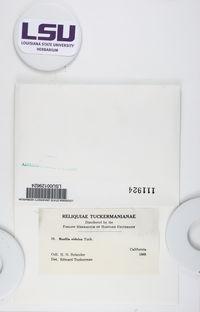 Diplotomma penichrum image