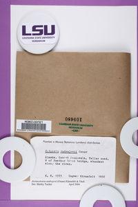 Arctocetraria andrejevii image