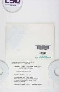 Parmelinella salacinifera image