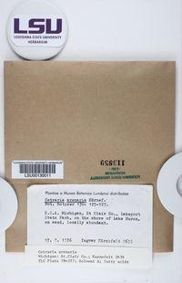 Cetraria arenaria image