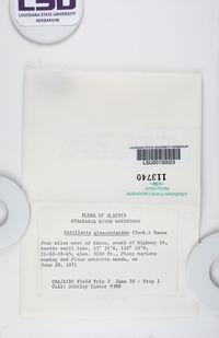 Catillaria glauconigrans image