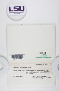 Cetraria ericetorum image