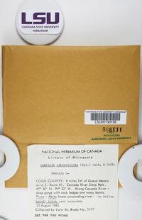 Cetrelia cetrarioides image
