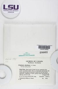 Cladonia alaskana image