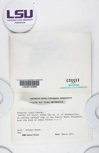 Cladonia didyma var. didyma image