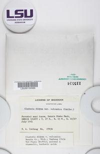 Cladonia didyma var. vulcanica image