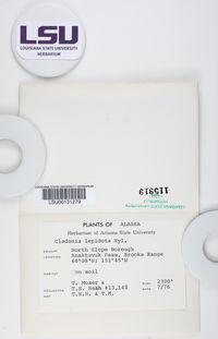 Cladonia trassii image