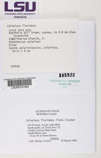 Caloplaca floridana image