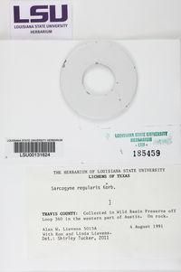 Sarcogyne regularis image