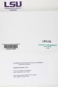 Ramalina sinensis image