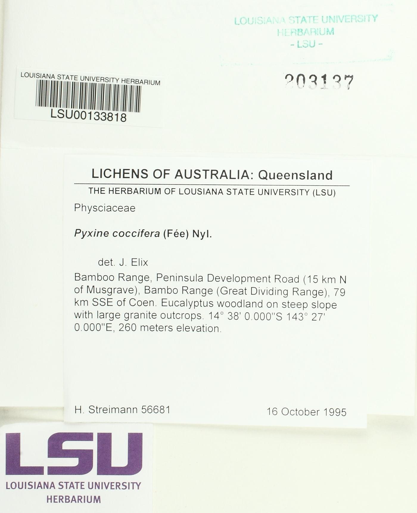 Pyxine coccifera image