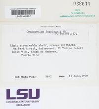 Coenogonium leprieurii image